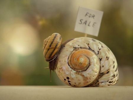 For Sale - house, shell, snail, snail shell, funny
