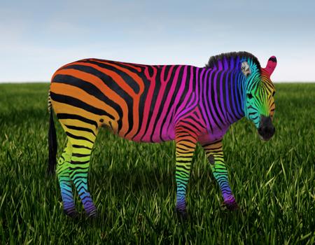 RAINBOW ZEBRA - colorful, stripes, rainbow, zebra