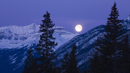Moonlight - mountain, moonlight, forest, snow