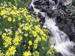 Waterfall with Yellow flowers