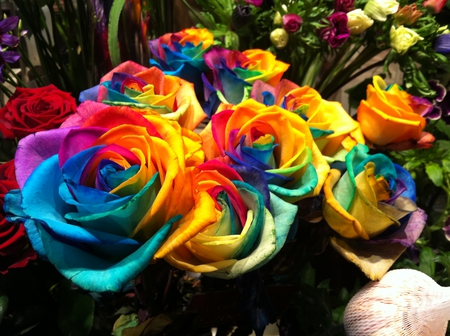 Colorful Roses - colorful, rose, flower, flowers, nature, beautiful, roses