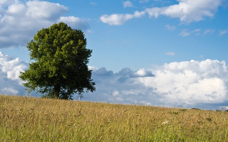 Master Tree - blue, rural, beautiful, clouds, fields, nature, tree, skies