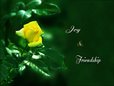 Yellow Rose Flowers Nature Background Wallpapers On Desktop