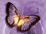 Purple Abstract Butterfly F1C