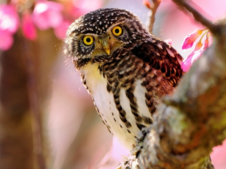 Sweet Owl - owl, bird, birds, owls, animals, animal, sweet