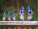 Family blue