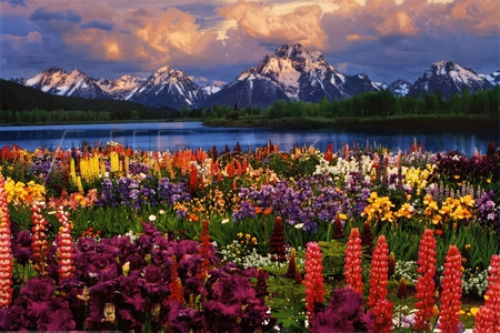 Mountain Garden - Mountains & Nature Background Wallpapers on ...