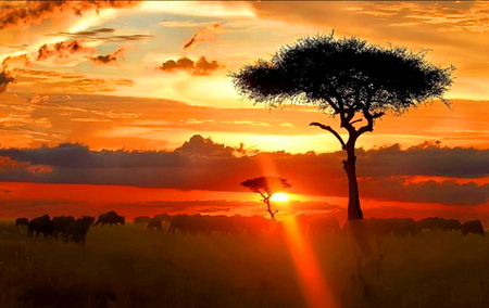 Serengeti eve - orange, sunset, africa, red, clouds, gold, tree