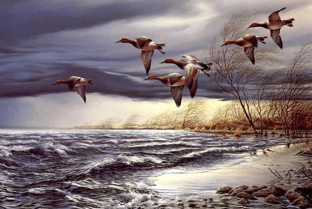 Birds over the sea - plants, birds, shoreline, sunrise, clouds, over, sea