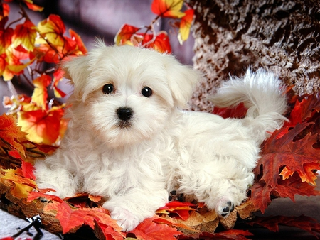 Snow White - leaves, white, puppy, dog