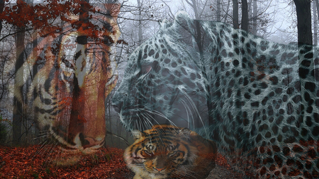 The'3'Big'Cats - leopard, fall, autumn, cheetah, three, the three big cats, lion, forrest, falling leaves, road, red leaves, 3, cats, big cats