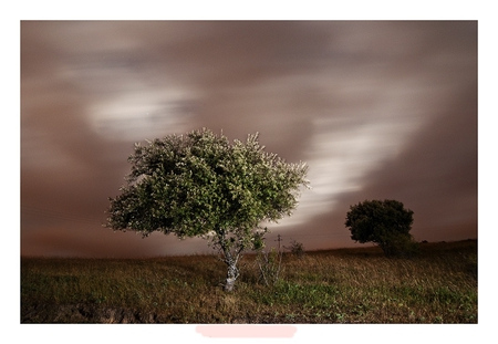 Separate... - image, isolated, silence, separate, trees, abstract, sky, alone, 3d, texture, nature, interesting, field, detached