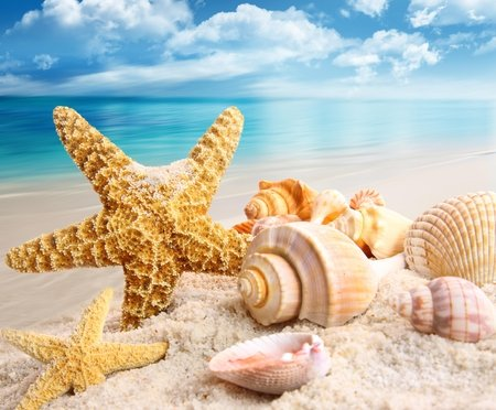 Summer - beauty, lovely, blue, sands, pretty, summer time, shine, beautiful, starfish, summer, nature, peaceful, glow, water, sea, sand, scallops, treasure, seashells, nice, clouds, shells, shell, view, ocean, colors, rays, beach, star, sky