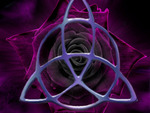 Purple roze