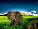 big_elephant_running_in_grass