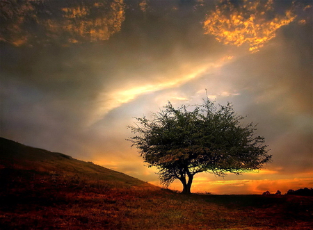 Lonely tree - tree, beautiful, sunrise, lonely, over, field
