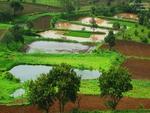 Rice Agri