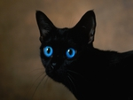 WITCHY\'S CAT