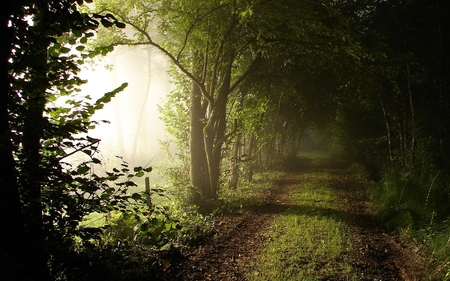 Road - road, photography, harmony, nice, walk, trees, nature, beauty, forest, beautiful, cool, lovely, fog, pretty, green