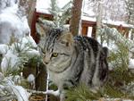 cat on a pine tree