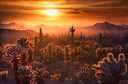 Desert evening - desert, gold sky, sunset, clouds, mist, heat, mountains, plants, cacti