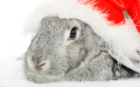 Christmas Bunny - rabbit, christmas, bunny, joy, xmas, winter