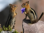 Chipmunk\'s Love