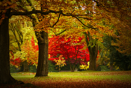 Autumn - red, forest, fall, autumn, grass, colors, beautiful, park, trees, leaves, nature