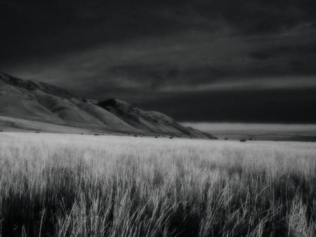 the nightmare - black and white, nature, fields, beatiful