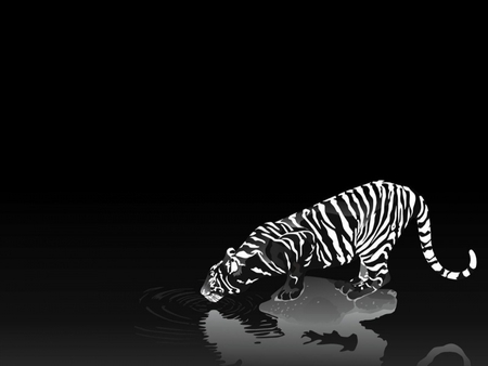 black and white tiger - beatiful, black and white, tiger, cat, animal