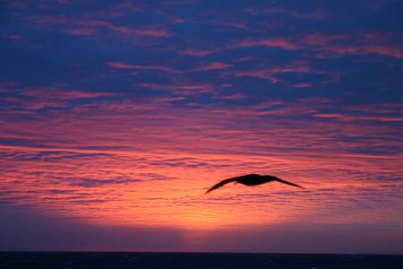 Sue�o de verano en la Antartida - paisaje, mar, pajaro, ave