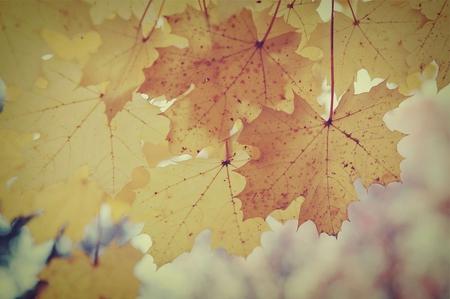 Vintage Fall Leaves Flowers Nature Background Wallpapers On Desktop Nexus Image 749040