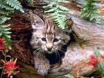 CUTE CAT FOR SHEBIBA BABU