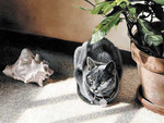 Gray Cat and Seashell