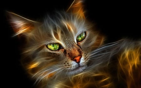 Beautiful 3d Cat Cats Animals Background Wallpapers On