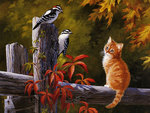 Red Tabby and Woodpeckers
