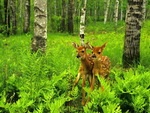 Deer little twins