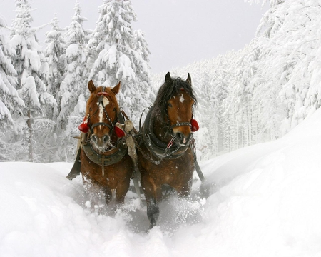 Winter Walk - cold, snow, winter, walking, horses, animals, white, trees, nature