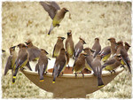 Crowded Bird Bath 1