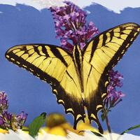 exotic floral butterfly wallpapers  page 13  desktop nexus
