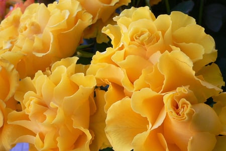 Sunday Friendship Roses - bouquet, friendship, sunday, still life, roses, yellow