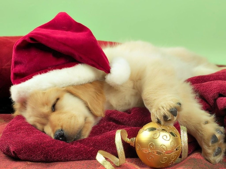 Sweet christmas pupy - Dogs & Animals Background Wallpapers on ...