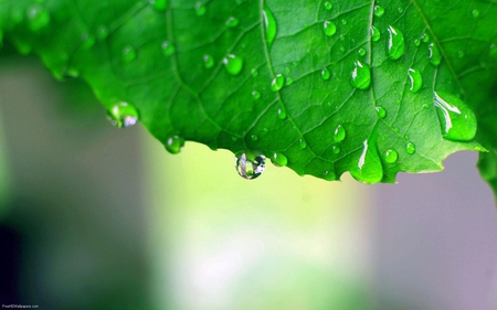 Fresh Raindrops ! - fresh, raindrops, green, leaf