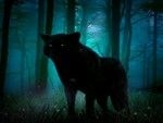 Night Of The Black Wolf