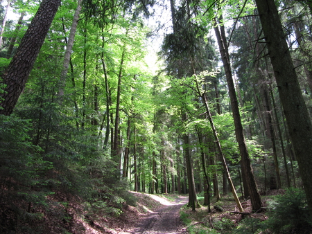 Nature at its best - forest, green, paths, trees