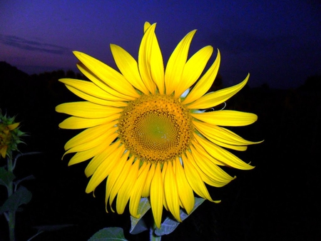 Good night flowers nature background wallpapers on - Good night nature pic ...