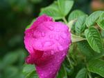 rained