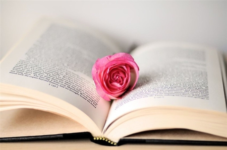 Rose in the Book - Photography & Abstract Background Wallpapers on ...