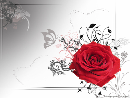 I Love You Mr Rose Flowers Nature Background Wallpapers On