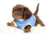 Cute Catel Puppy